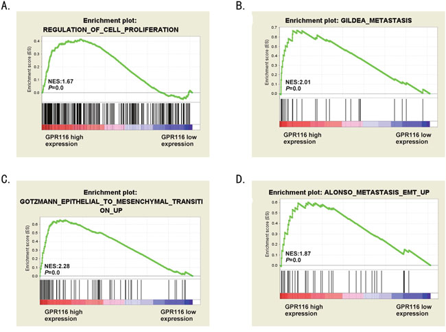 The biological functions of GPR116 in CRC.