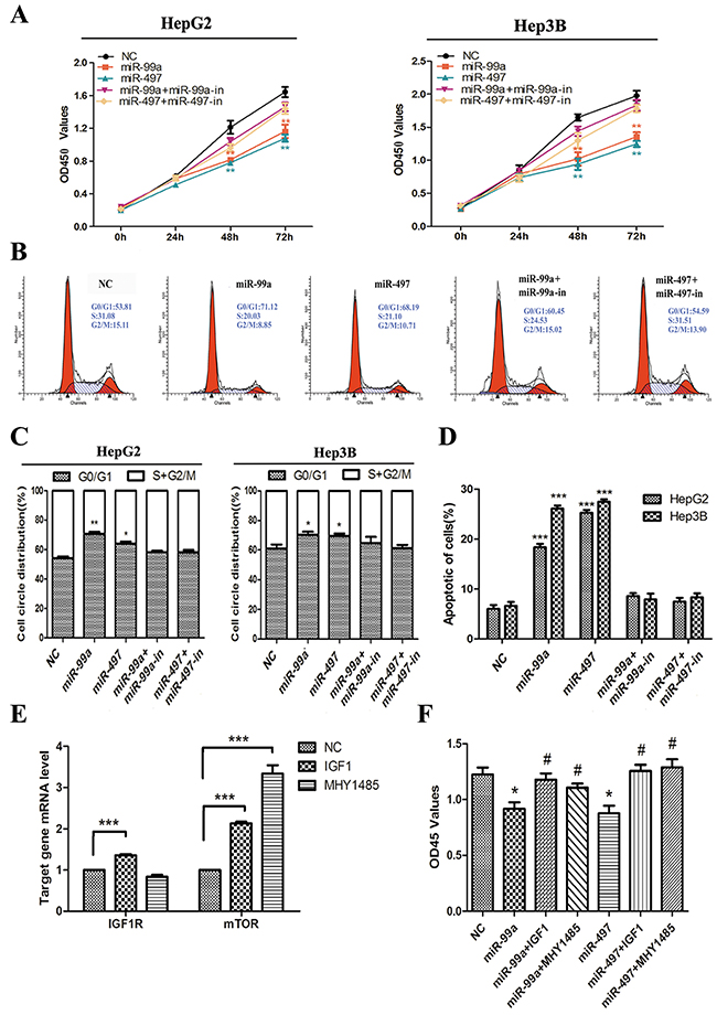 Up-regulation of miR-99a and miR-497 inhibited liver cancer cell proliferation, delayed cell cycle progression, and promoted apoptosis in liver cancer cell, which were reversed by up-regulating IGF1R and mTOR.