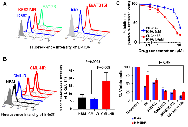 Increased surface expression of ERα36 in TKI-resistant cells and CD34
