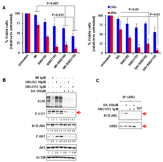 SNG inhibitors in combination with TKIs effectively eliminate aggressive BCR-ABL