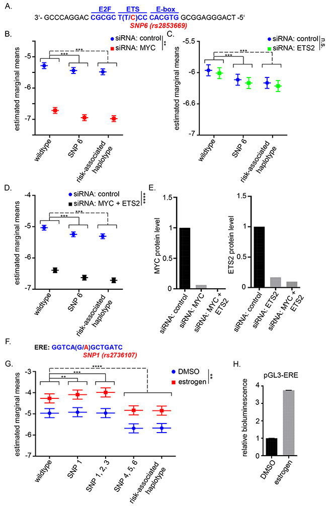 TERT promoter activity upon MYC and/or ETS2 silencing and estrogen induction.