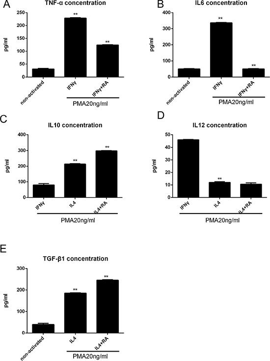 RA enhances anti-inflammatory macrophage activation in vitro analyzed by ELISA.