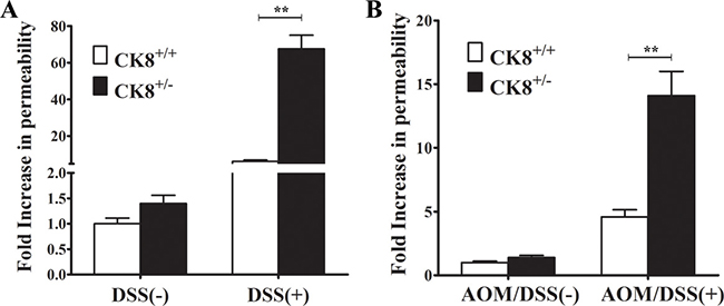 CK8+/− mice exhibit increased colonic permeability during DSS-induced colitis and AOM/DSS-induced colorectal carcinogenesis.