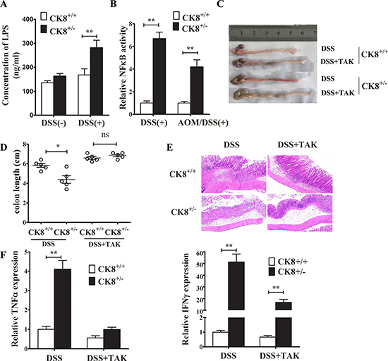 TLR4 inhibitor treatment reduced the susceptibility of CK8+/− mice to DSS-induced colitis.
