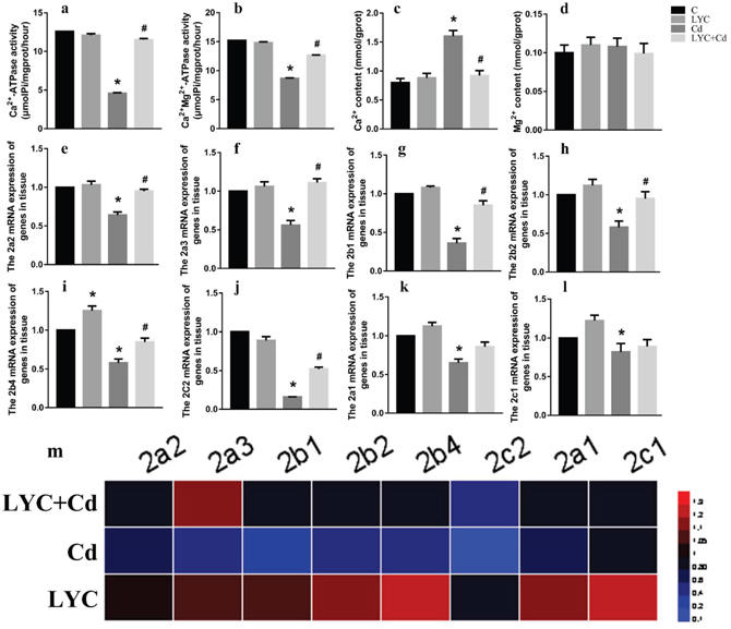 LYC inhibits Cd-induced dysfunction in hippocampal Ca2+ homeostasis.