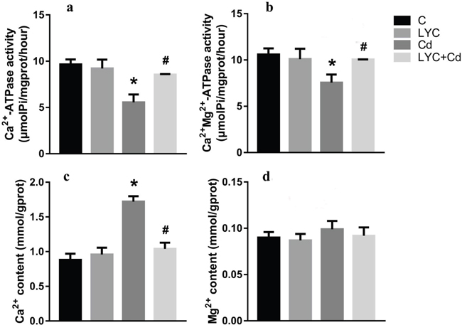 LYC inhibits Cd-induced dysfunction in Ca2+ homeostasis in TH22.