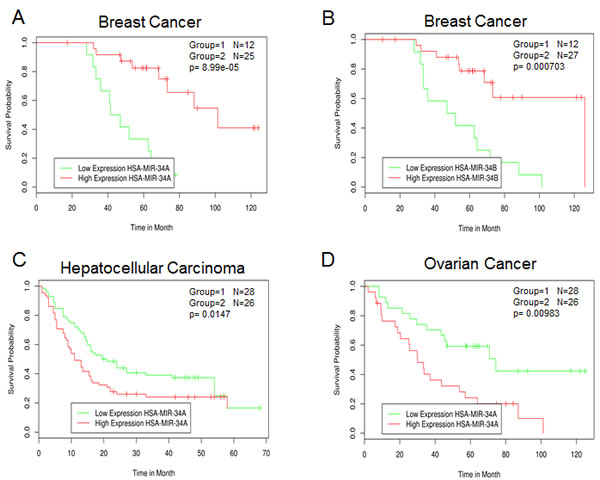 Survival correlation of miR-34 family in several human cancer datasets.