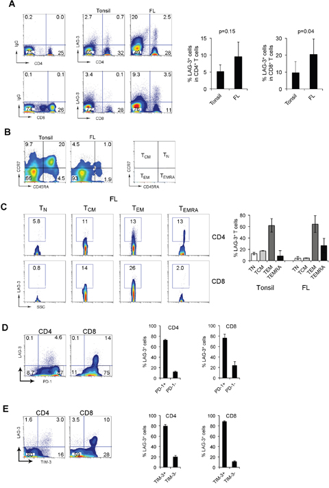 LAG-3 is primarily expressed on intratumoral PD-1+ T cells in FL.