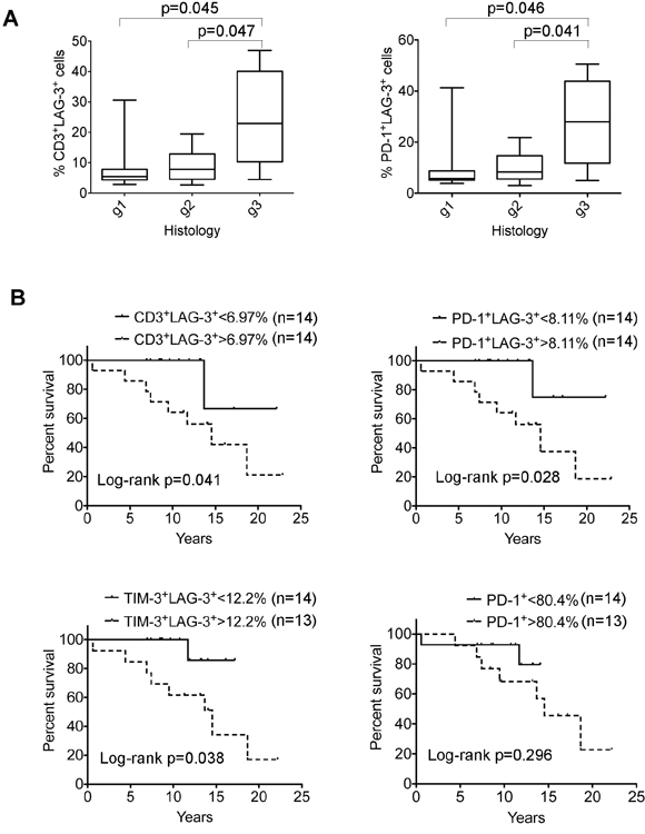 Correlation of LAG-3–expressing cells with clinical survival in FL patients.