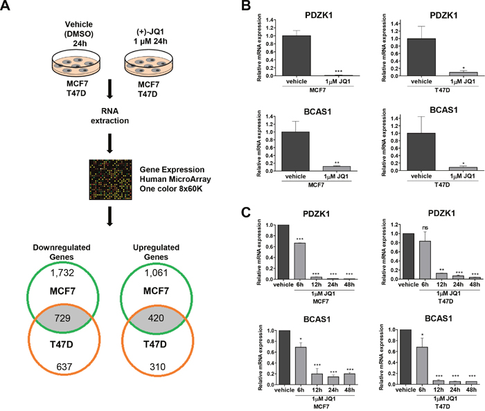 Expression microarray analyses identify PDZK1 and BCAS1 as breast cancer oncoproteins downregulated by JQ1 treatment in human luminal breast cancer cell lines.