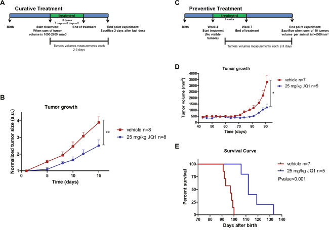 JQ1 treatment inhibits growth and prevents formation of luminal breast tumors in the MMTV-PyMT mouse model.