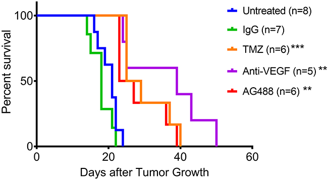 AG488 therapy increases percent survival in G55 gliomas.