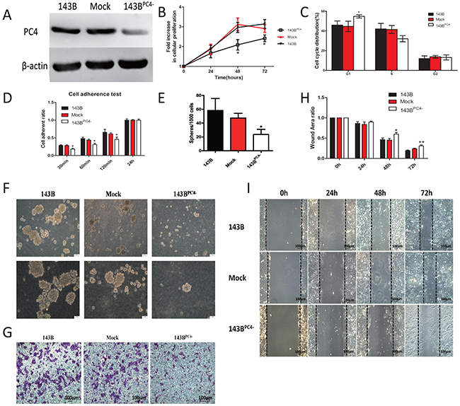 Stable knockdown of PC4 and the accompanied malignant phenotype change.