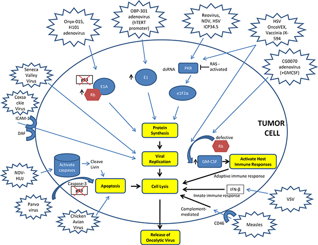 Oncotarget   Review: Oncolytic virotherapy, updates and