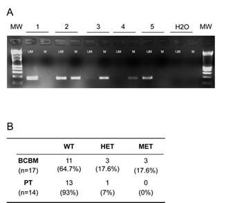 Promoter CpG methylation of