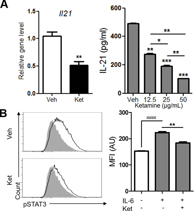 Ketamine negatively regulates the expression of IL-21 and the phosphorylation of STAT3 during Th17 cell differentiation.