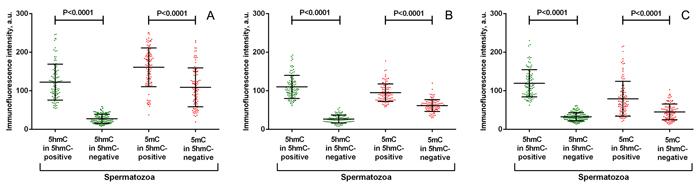 Quantitative analysis of anti-5-hydroxymethylcytosine (5hmC) and anti-5-methylcytosine (5mC) fluorescence intensity in representative spermatozoa from 3 individuals (A, B, C).