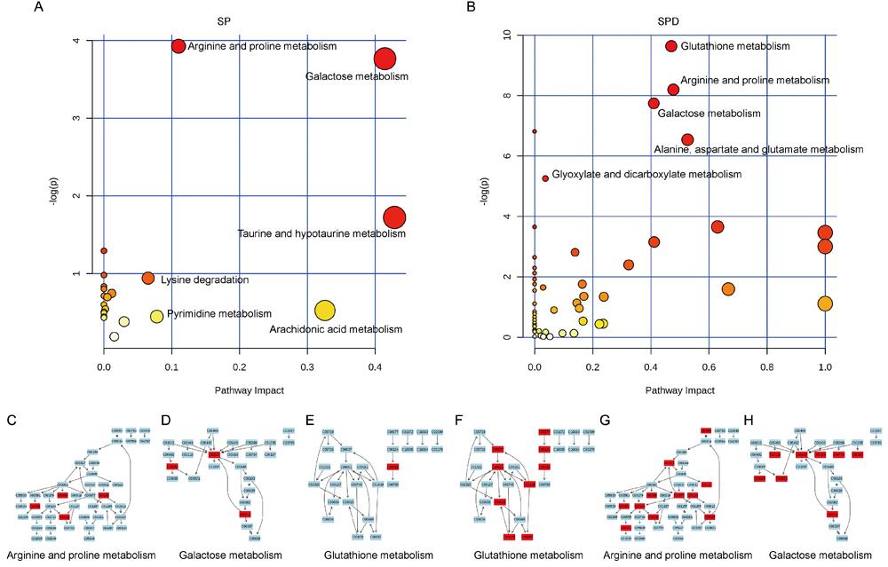 Pathway analysis of aged rat heart metabolites.