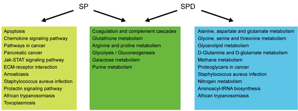 Pathway analysis of proteins and metabolites differentially expressed/produced following SP or SPD treatment.