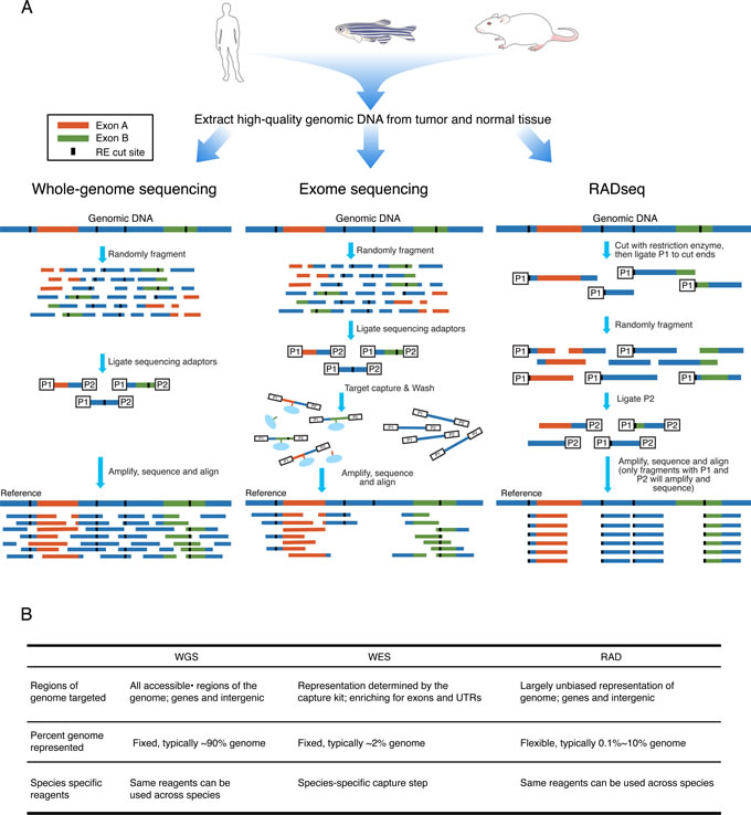 Oncotarget | Tumor diversity and evolution revealed through