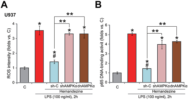 Hernandezine inhibits LPS-induced ROS production and NF-kB activation.