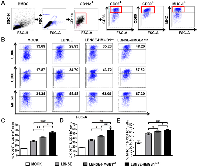 Activation of BMDCs in vitro after infection with different rRABVs.