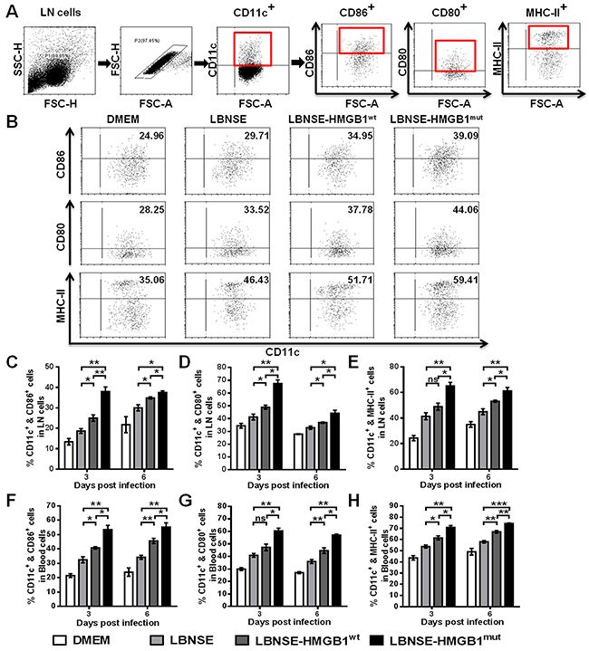 Recruitment and/or activation of DCs in mice immunized with different rRABVs.