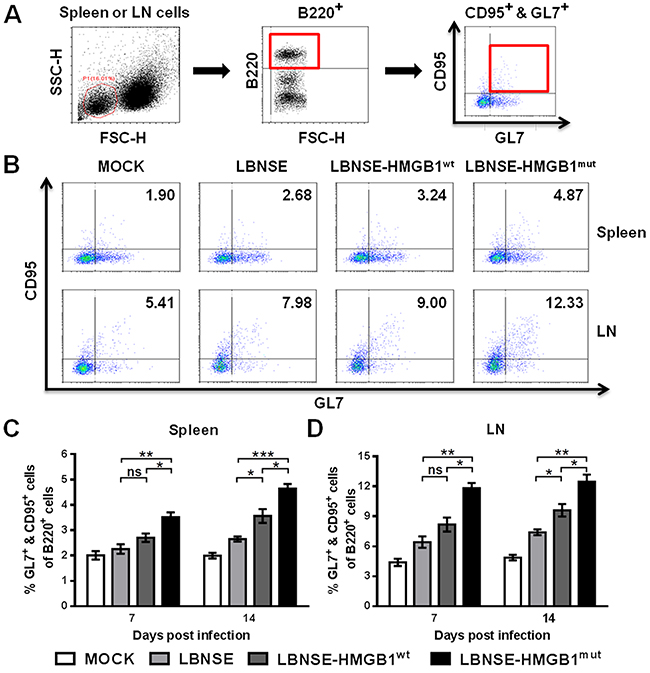 Recruitment of GC B cells in mice immunized with different rRABVs.