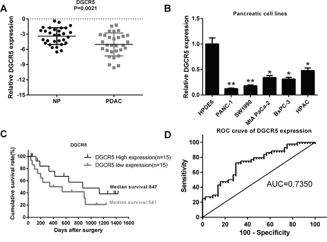 The lncRNA DGCR5 is downregulated in PDAC and is associated with the clinical outcome of patients with PDAC.