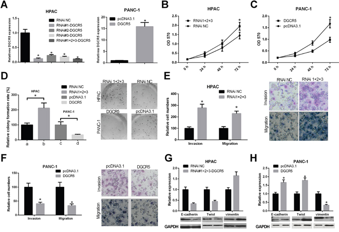 The role of lncRNA DGCR5 in the malignant phenotype of PDAC cells.