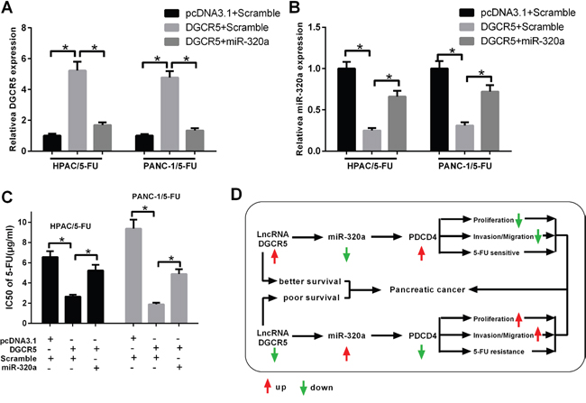 MiR-320a mediates the impact of DGCR5 on the resistance of PDAC cells to 5-FU.