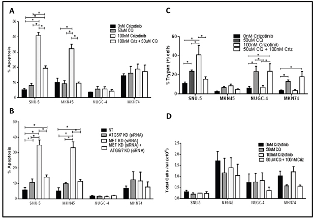 Autophagy is required for crizotinib-induced apoptosis.