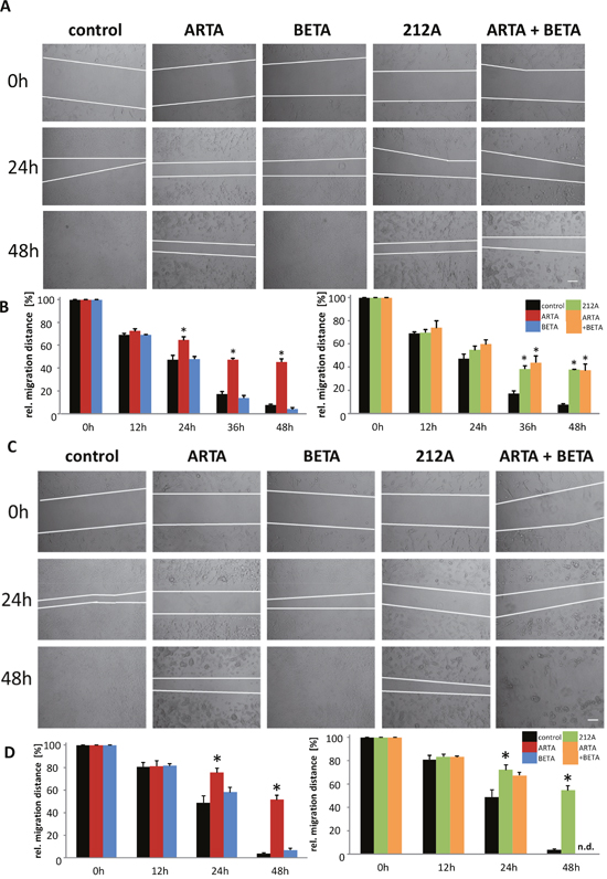 Extent of inhibition of cell migration by Artesunic acid, Betulinic acid and the hybrid on rodent glioma cells.