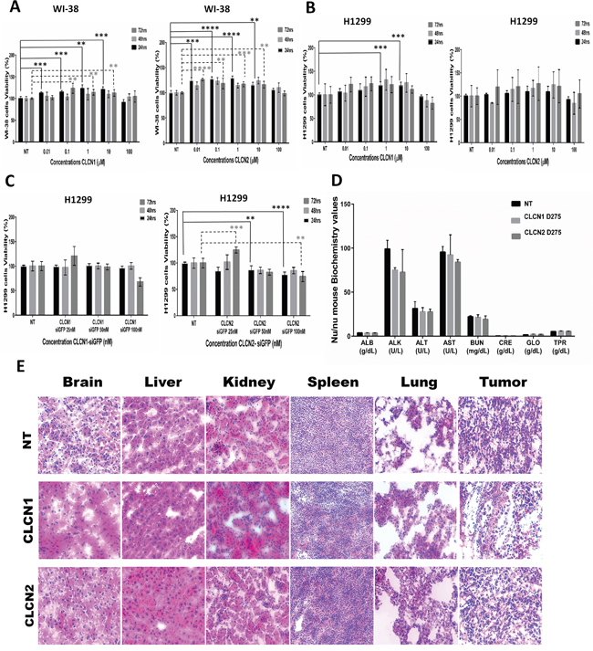 CLCNs toxicity in vitro and evaluation of damages in organs function after CLCNs in vivo treatment.