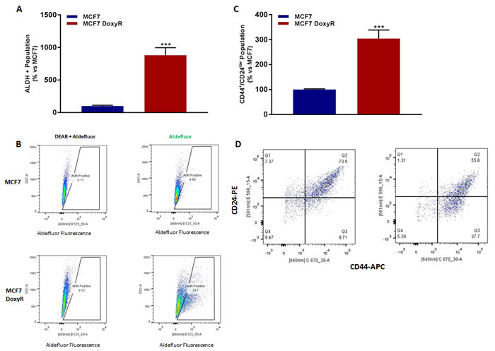 MCF7 DoxyR cells show increased CSC markers.
