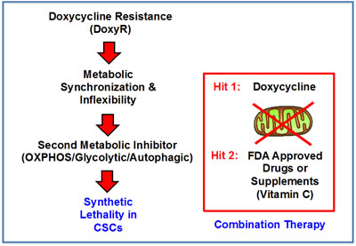 A two-hit synthetic lethal strategy for eradicating DoxyR CSCs.