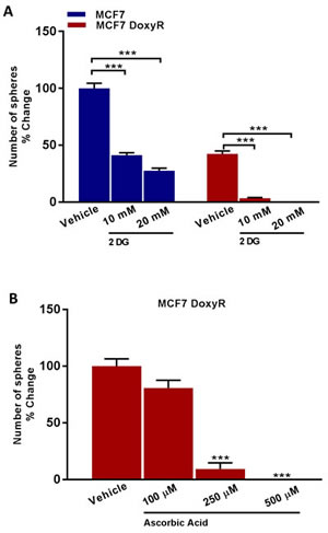 Glycolysis inhibitors reduce mammosphere formation in MCF7 DoxyR cells.