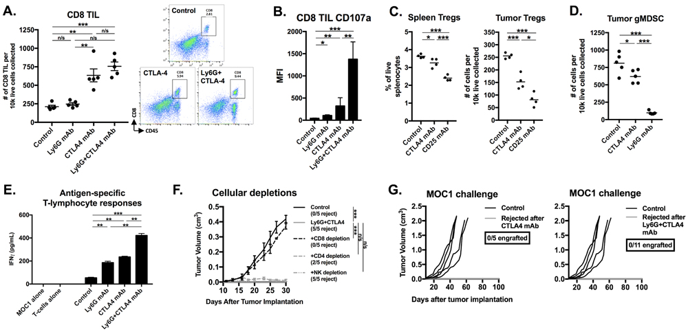 Immune correlative and functional analysis revealed partial Treg depletion, CD8