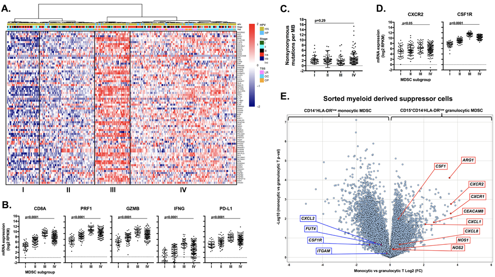 Analysis of human HNSCC data revealed high CXCR2 axis and checkpoint expression and identified MDSC rich subgroups that are T-cell inflamed.