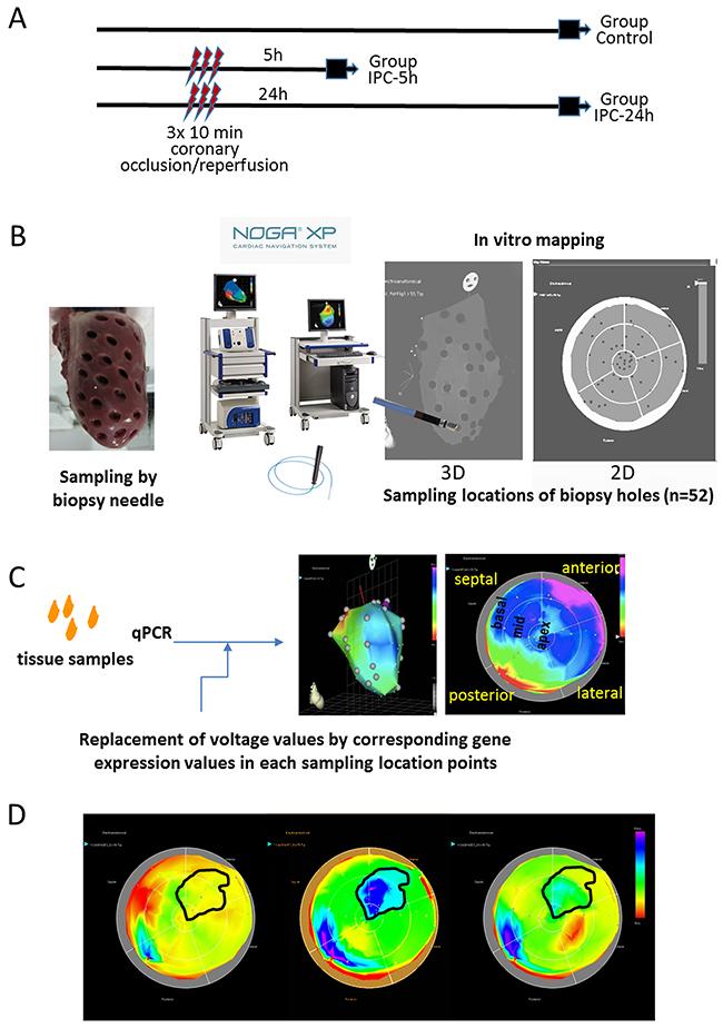 Study design and principle of NOGA-guided image-omics.