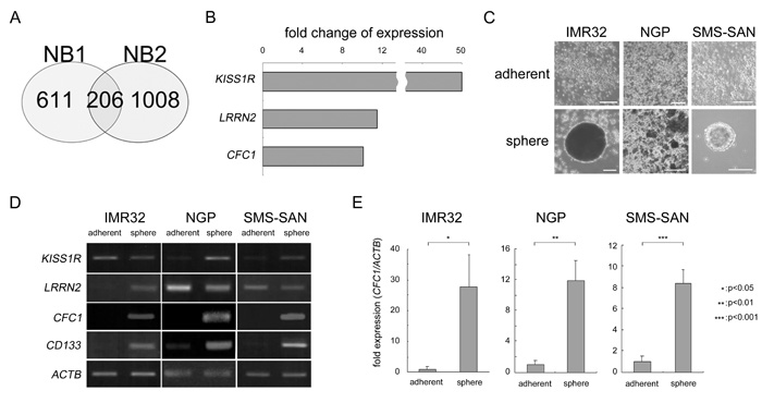 Target molecule selection by the cancer stem cell model in NB.