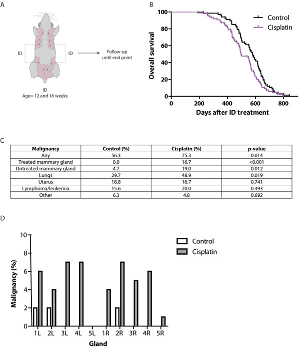 Long-term effects of ID cisplatin treatment.