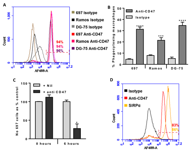 CD47 is expressed on the surface of malignant B-lymphocytes, and anti-CD47 antibodies increase their phagocytosis by macrophages dramatically reducing their numbers within 6 hours.