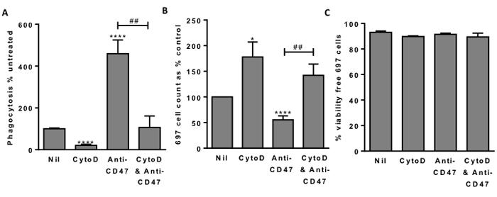 Blocking phagocytosis allows survival of 697 lymphoblast cells.