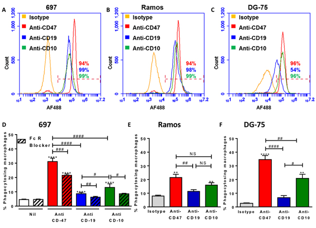 Antibodies to three cell surface expression markers increases phagocytosis and the potency of antibodies to induce phagocytosis is related to expression levels.
