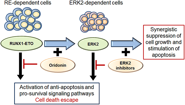 Scheme for ERK2 dependent survival of cells with inhibited RE and effect of ERK2 inhibitors and oridonin.