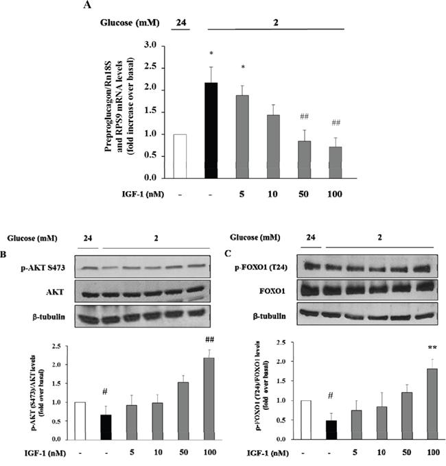Dose-response effect of IGF-1 on preproglucagon mRNA levels, p-Akt (Ser473) and FOXO1 (Thr24) phosphorylation.
