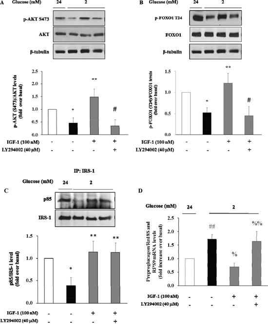 Effect of IGF-1 on PI3K/Akt pathway and preproglucagon mRNA levels.