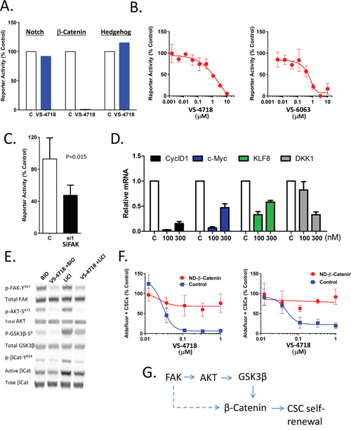 Inhibition of FAK attenuates Wnt/β-catenin signaling.