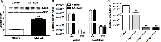 The bacteriostatic effects of Lcn2.